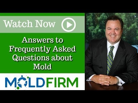 What Is a Mold Report? | Atlanta Toxic Mold Attorney | David Carter | Mold Firm