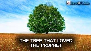 Tree That Loved The Prophet ᴴᴰ | Shaykh Zahir Mahmood