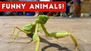 Funniest Pet & Animals Moments Caught On Tape Weekly Compilation 2016   Funny Pet Videos