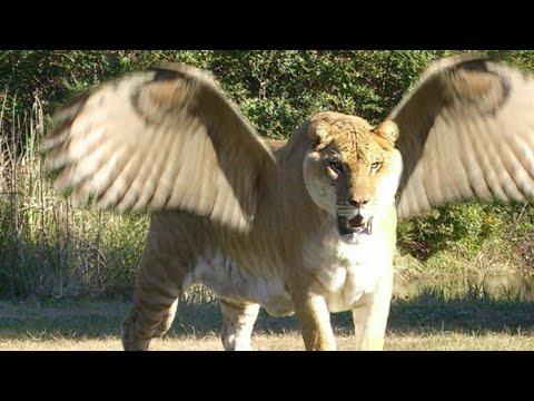 Hybrid Animals जो आपने कहीं नहीं देखें होंगे | Animals you won't believe Actually Exists