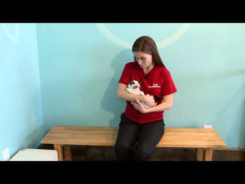 Why Kittens Should Be Spayed at 4 Months : Pet Tips