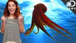 Cephalopod Awareness Week!