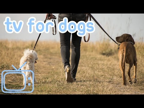 Dog Walk in Nature! Sheep and Horse Movie for Dogs to Watch! Walking Simulation Dog Entertainment!
