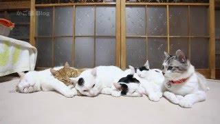 6ひきでころん Six cats 2016#2