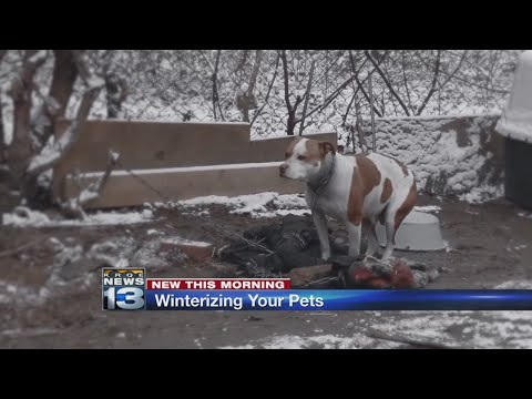 Albuquerque Animal Welfare urges people to keep pets warm this winter