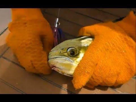 Fishing Adventures #81 - Dorado (Mahi) trolling in a Hong Kong Tournament