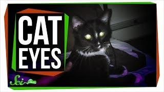 Why Do Cat Eyes Glow in the Dark?
