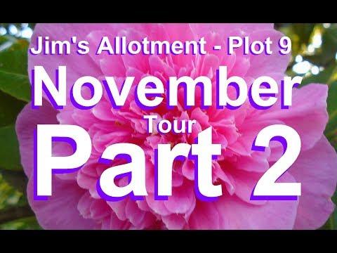 Jim's Allotment - Plot 9 - November Tour Part 2 - Yacon, Raspberry, Asparagus and Comments.