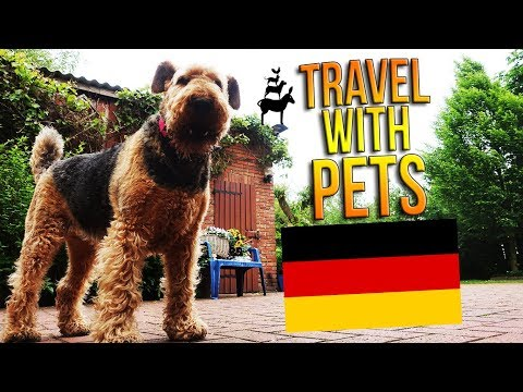 How To TRAVEL GERMANY With PETS (by car, train, plane, bus...) 🐱🐍🐶 Get Germanized