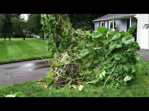 Hurricane Irene hit my Front Yard Veggie Garden