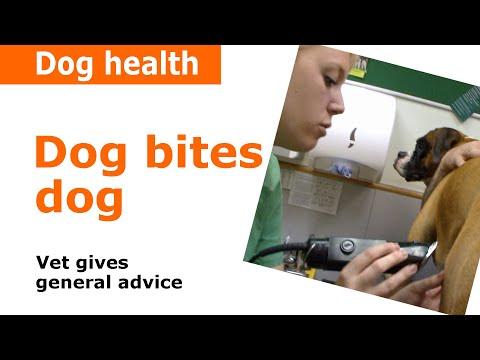 Dog Bites Dog - Vet Advice