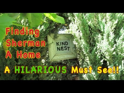 DUCK Rescue - Finding Sherman A Home! A HILARIOUS Must See!