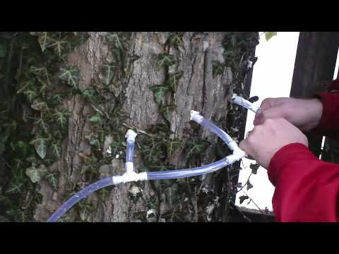 Tap Your Maple Tree in 15 mins/$15 make maple syrup