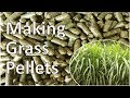 Grass Pellet Plant Making Biomass Fuel Pellets