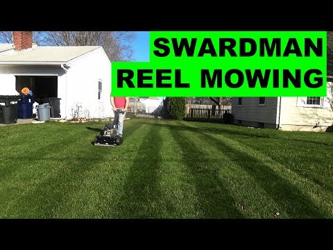 Reel mowing KBG at 2in and 3/4in with the Swardman Edwin Reel Mower