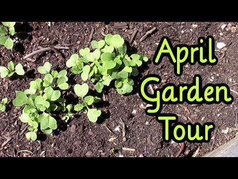 April Garden Update ~ Late Start This Year