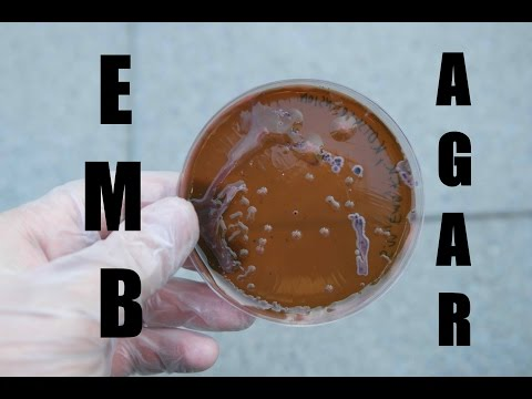 [DIY BIO] How to make EMB agar