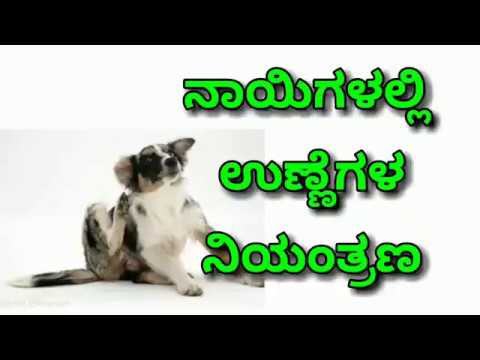 How to control ticks in dogs - kannada