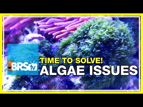 Week 48: Solving your reef tank's algae problems forever | 52 Weeks of Reefing #BRS160