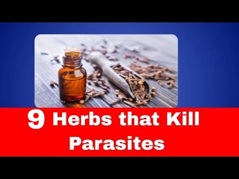 Herbs and Spices that kill parasites