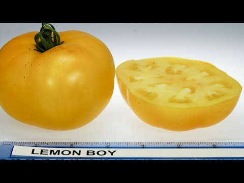 Yellow Tomatoes: what's the difference?