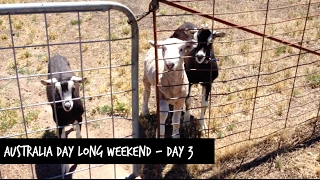 Australia Day Long Weekend - Day 3 - Vlog 125