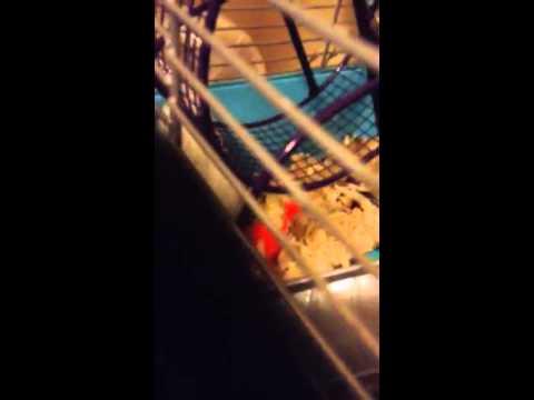 Little biebie running on her new wheel