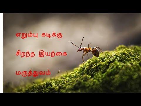 எறும்பு பூச்சிக்கடி எளிய இயற்கை வைத்தியம்    Best Home Remedies For Ant bites