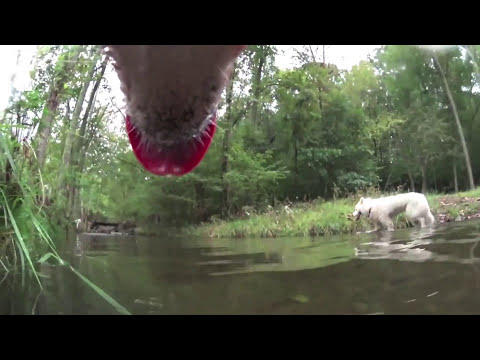 Dog Entertainment - Dog Relaxation - Dog Music with our Husky Dog Zarro while Free-Ranging
