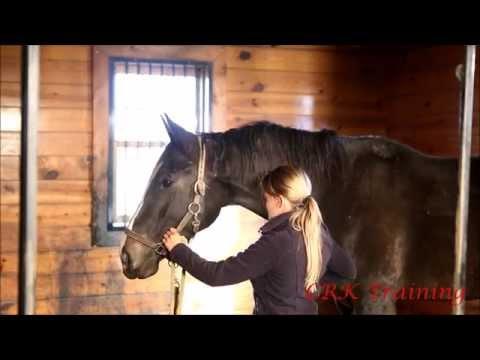 Teach Your Horse Head Down