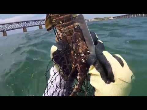 How to catch spiny lobster and gear...best video!!