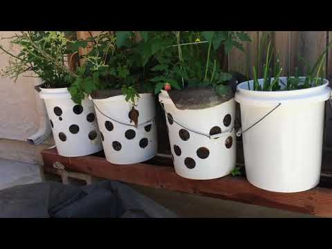 Grow Tomato and Other Vegetable in 5-Gallon Bucket in Rain Gutter Grow System