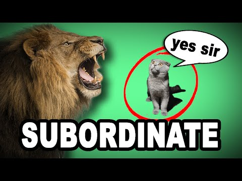 Learn English Words: SUBORDINATE - Meaning, Improve Your Vocabulary with Pictures and Examples