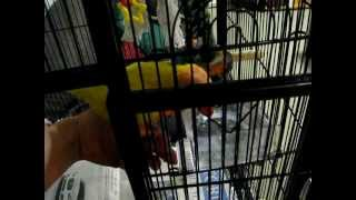 How To Toilet Train Your Lorikeet