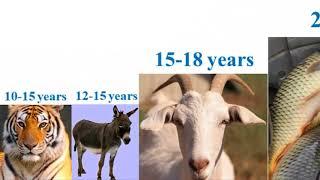 Download lifespan of animals Video