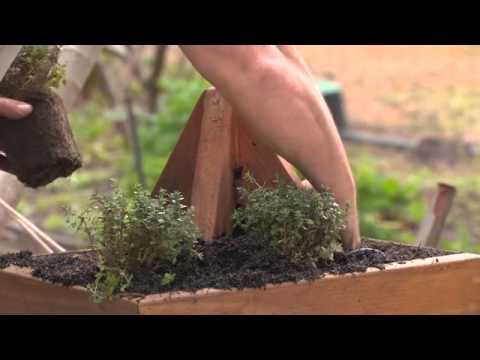 The Garden gurus - Baileys Pyramid Planter