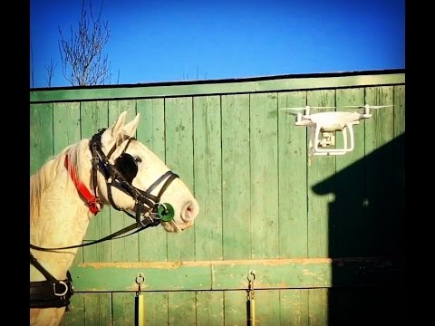 What happens when a carriage horse meets a drone... drone desensitisation training with Barry Hook.