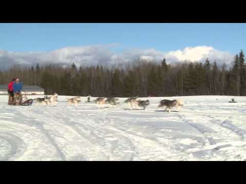 Canada Games TV Today - Dog Sledding in the North