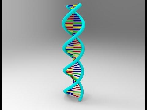 DNA 3D Model