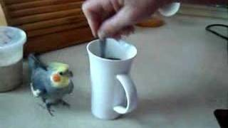 Bird makes coffee