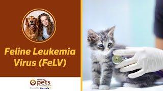 Dr. Becker Talks About Feline Leukemia Virus (FeLV)