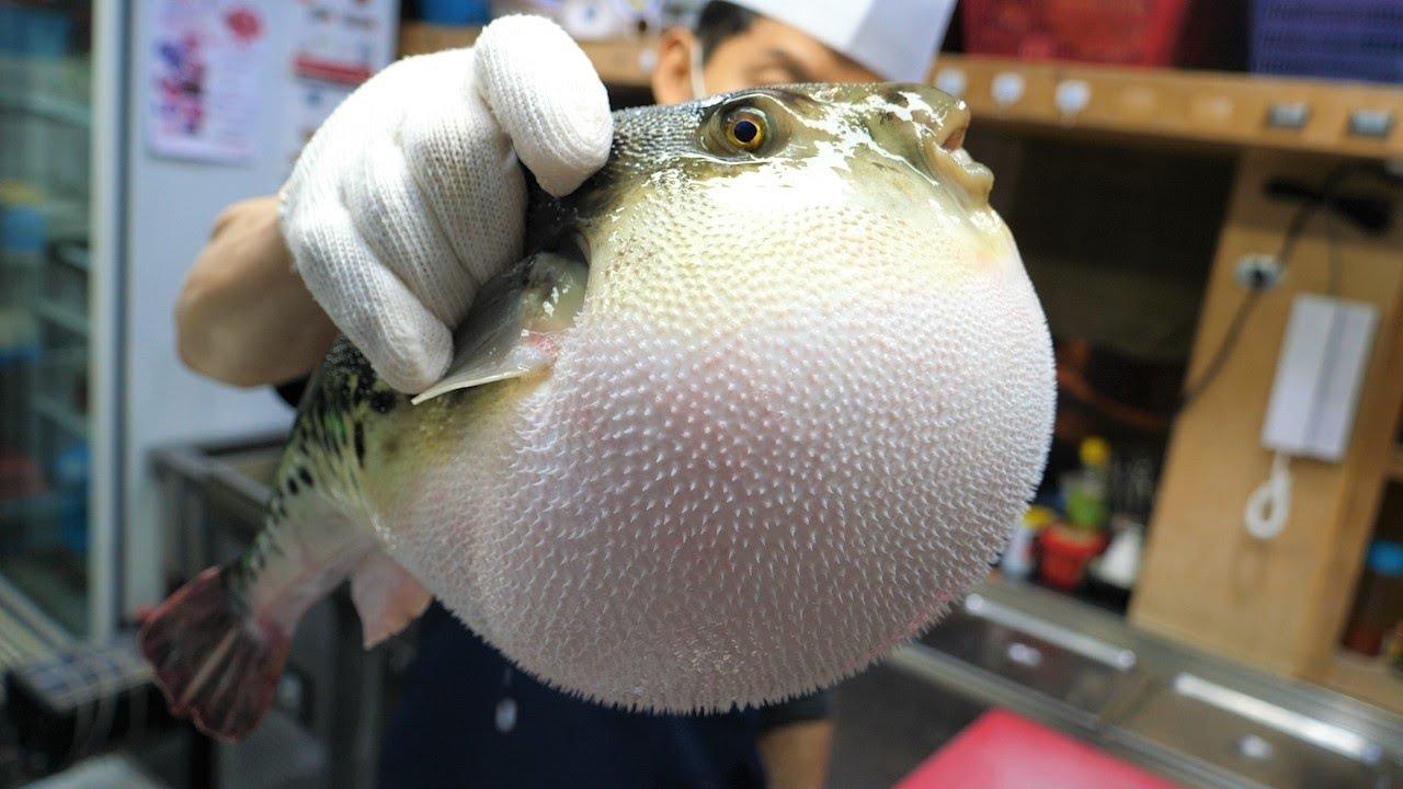 Amazing Skills of Blowfish Toxic Cleaning and Fried Blowfish - Korean Food [ASMR]