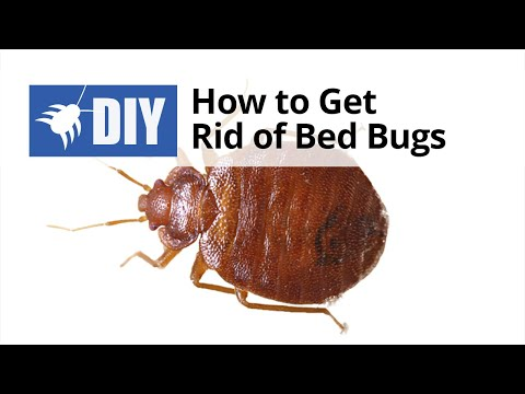 How To Get Rid Of Bed Bugs Quick Tips
