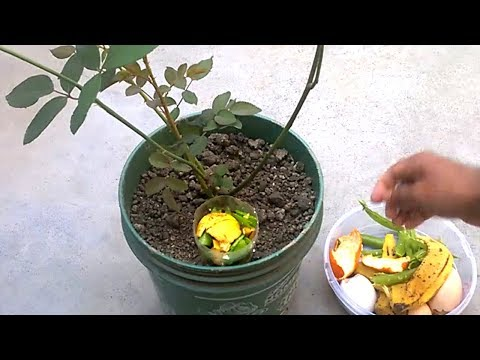 How to use organic fertilizer for any plants | Best homemade fertilizer