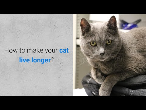 How to make your cat live longer? 7 important things