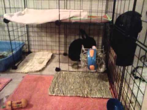 How to bond/tame your rabbit