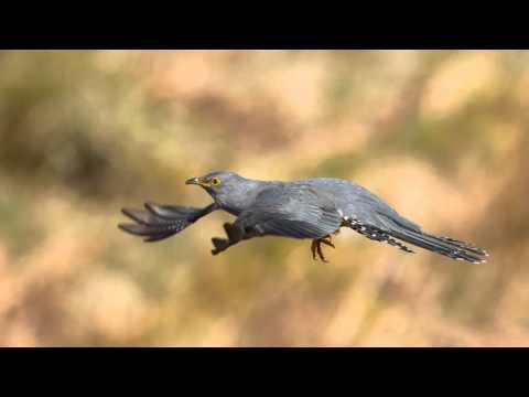 Scottish Photography Hides | Dumfries & Galloway | Wildlife | Nikon D4 |