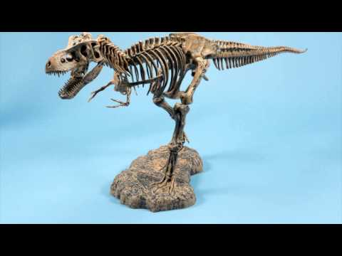 T Rex Model Demonstration