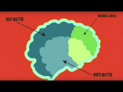 Pathological Liars vs Compulsive Liars - Gurtaz Benipal