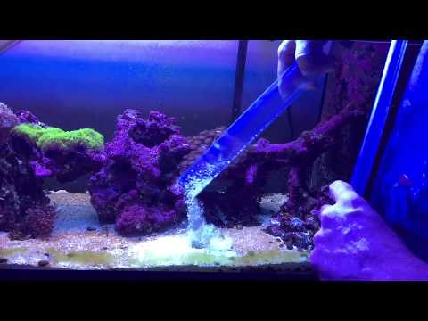 how to start a syphon without using your mouth in saltwater tank
